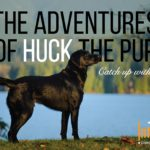 huckleberry-the-pup